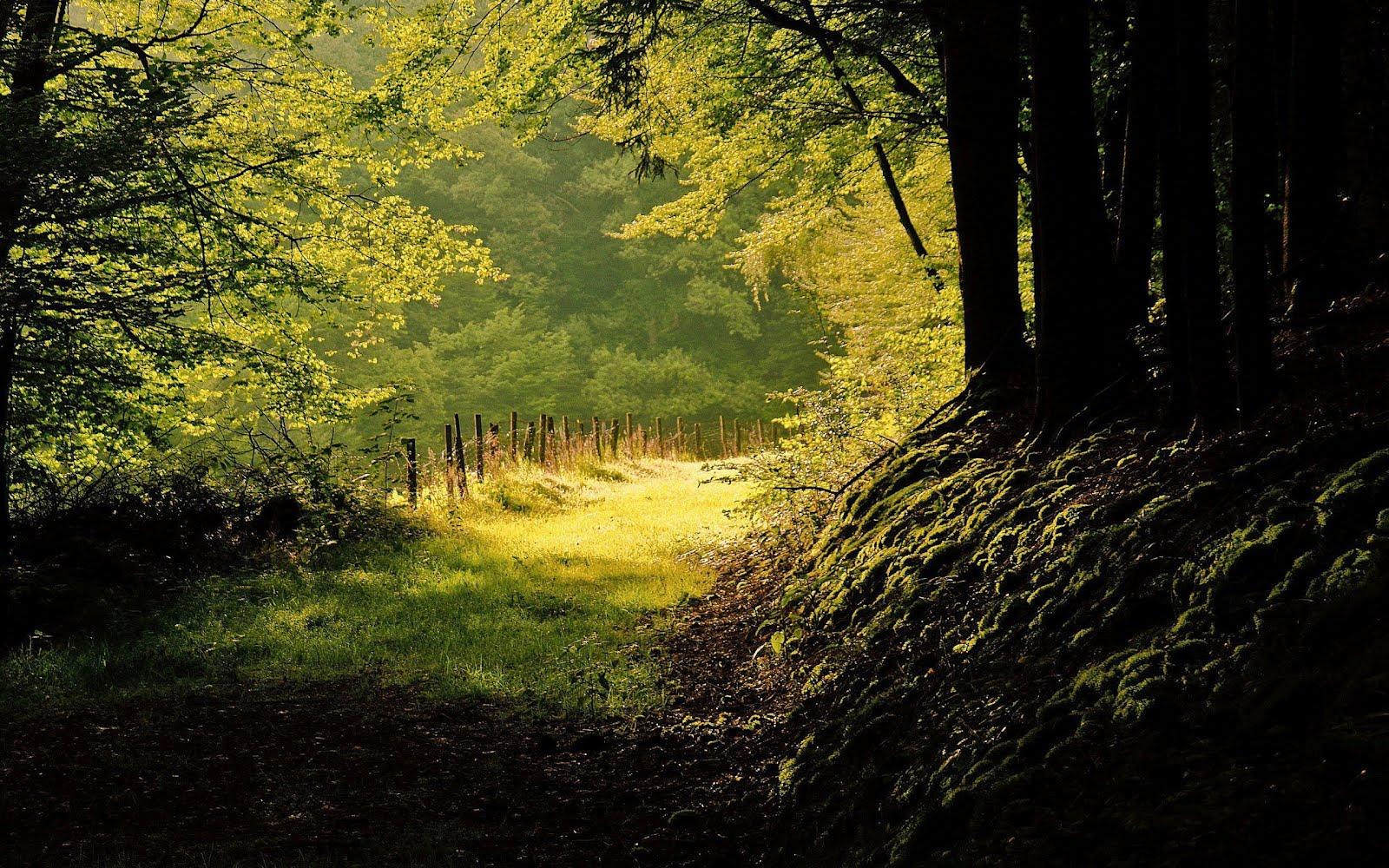 banco de im genes 10 fotograf as del bosque lugares para respirar aire puro. Black Bedroom Furniture Sets. Home Design Ideas