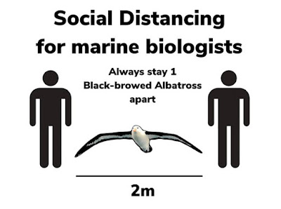 Social distancing for marine biologists: Always stay 1 blac-browed albatross apart