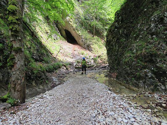Podążamy dalej zacienionym korytem potoku.