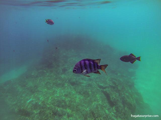 Mergulho na Praia do Sancho, Fernando de Noronha