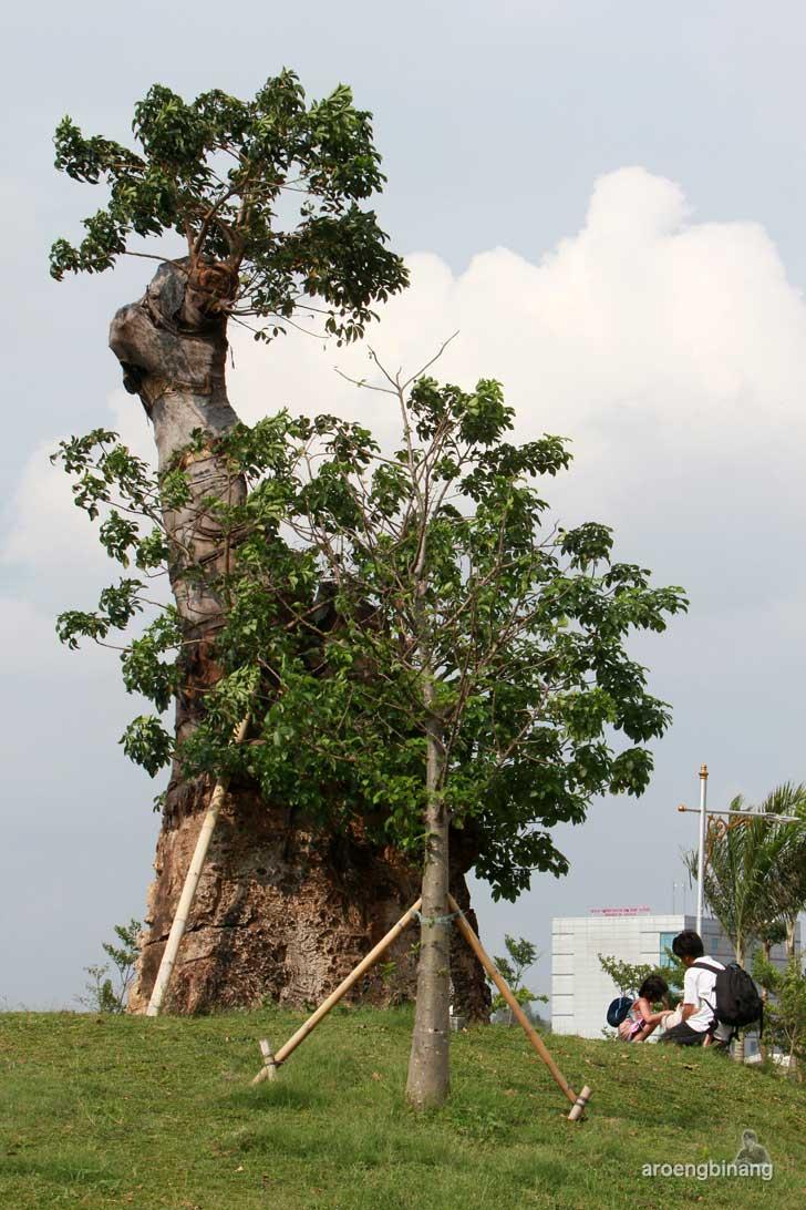 pohon baobab taman kota ria rio jakarta