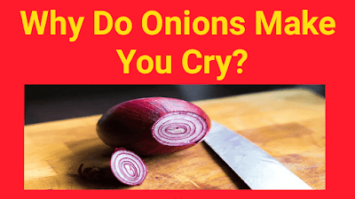 Why Do Onions Make You Cry?