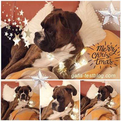 Boxer Amy wünscht frohe Weihnachten