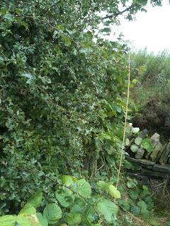 life on pig row, gardening