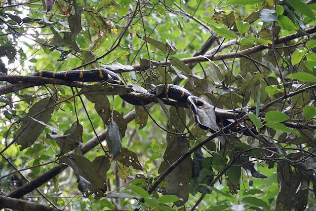 สามารถพบเห็นสัตว์ต่างๆมากมาย โดยเฉพาะงู ที่ขดตัวกับต้นไม้  ทั้ง งูเขียว งูเหลือม ที่โดเด่นสุดคือ ปล้องทอง ที่มีสีสันสวยงาม