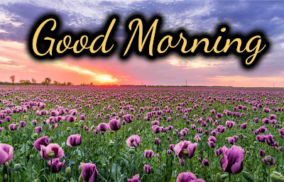 Download the Images of Good Morning