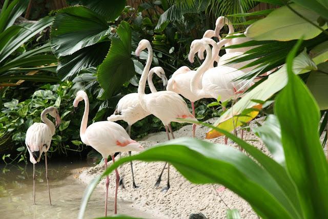 Tropical World indoor water park