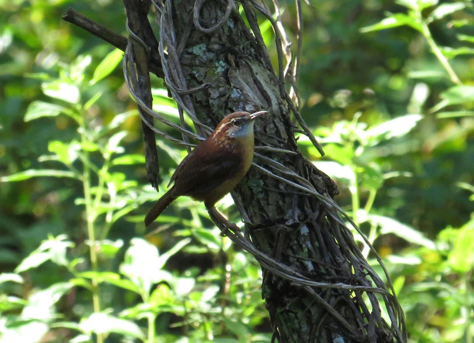 florida birding 2 mead botanical gardens and viera wetlands