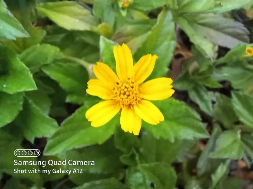 Samsung Galaxy A12 Camera Sample - Flower, Macro