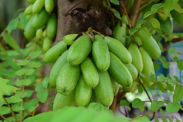 Manfaat belimbing sayur