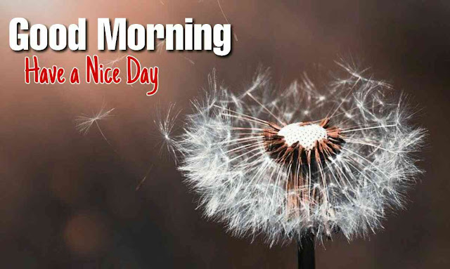 Good morning flowers download