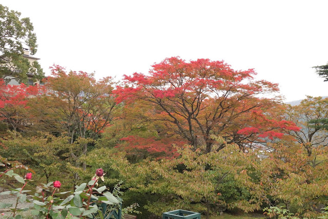 Gora Park in Autumn