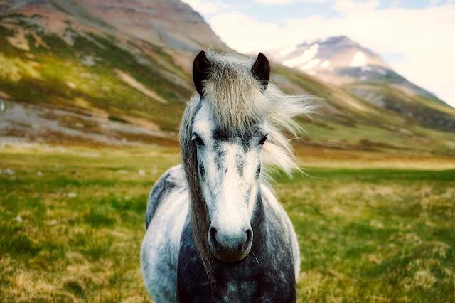 خيول بيضاء قوية 2020