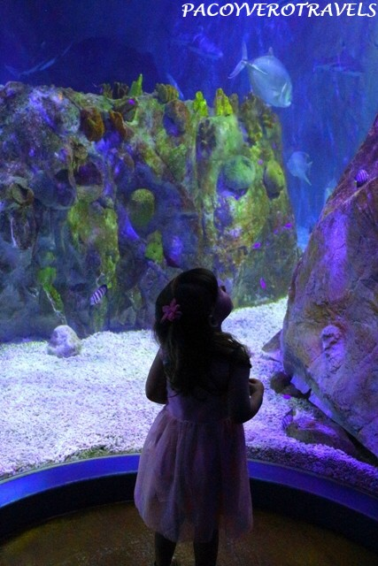 Aquarium Sealife Benalmadena