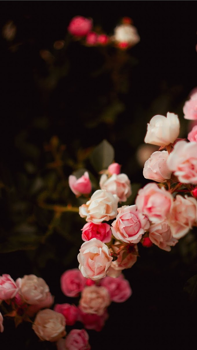 Plano de Fundo Ramo de Flores Rosa