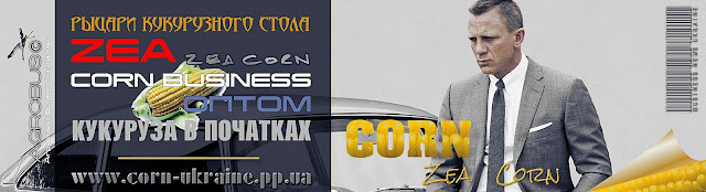 Кукуруза в початках купить Украина, 0985674877, 0957351986, Zea