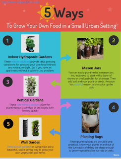Five Ways to Grow Your Own Food in an Small Urban Setting