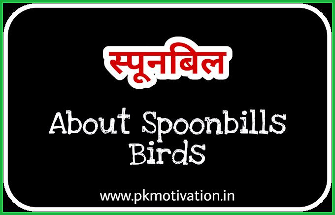 About Spoonbills Birds. स्पूनबिल पक्षी।