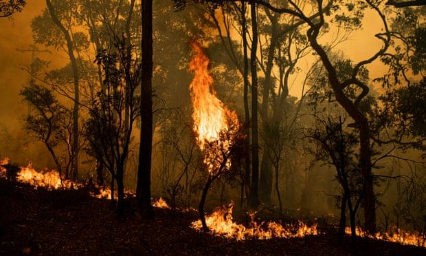 Front de feu à Kulnara, près du mont Mangrove, NSW. 6 décembre 2019.
