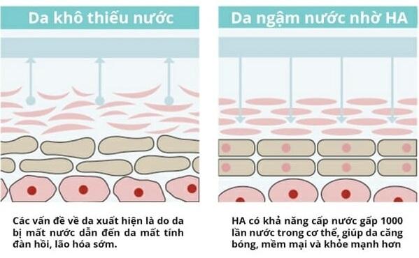 Hyaluronic Acid giúp hút ẩm từ môi trường ngoài vào da cũng như từ lớp hạ bì lên da