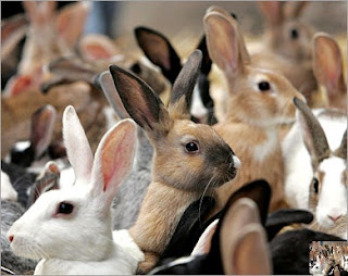 مشروع تربية الأرانب بالتفصيل المُمل