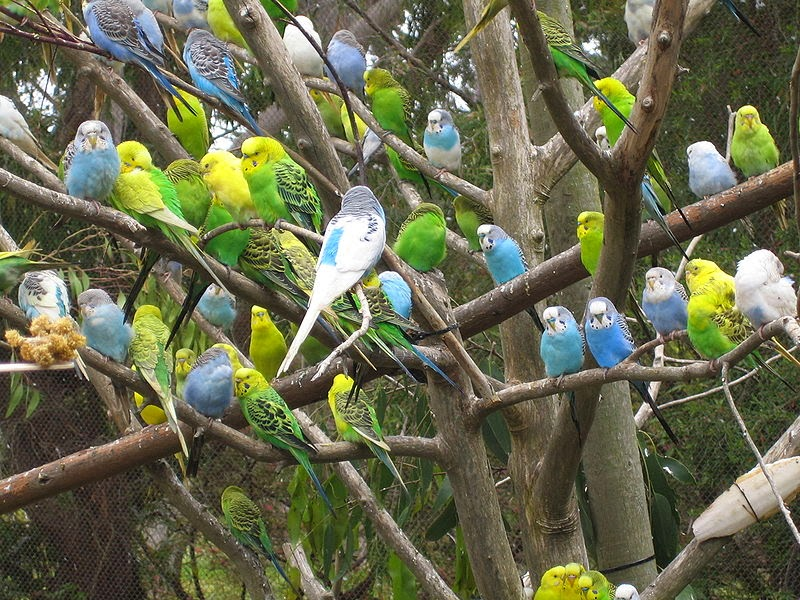 Nature Center Magazine: Eerie Bird Superstitions