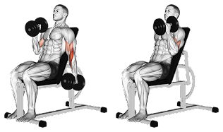 Incline bicep hammer curls, hammer curl, compound exercise