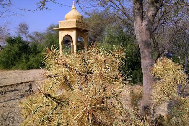 Desert plants of Thar desert