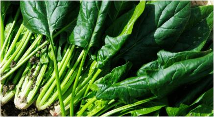 الخضراوات الورقية الخضراء السبانخ
