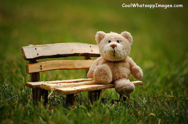 Cute Teddy Bear Images