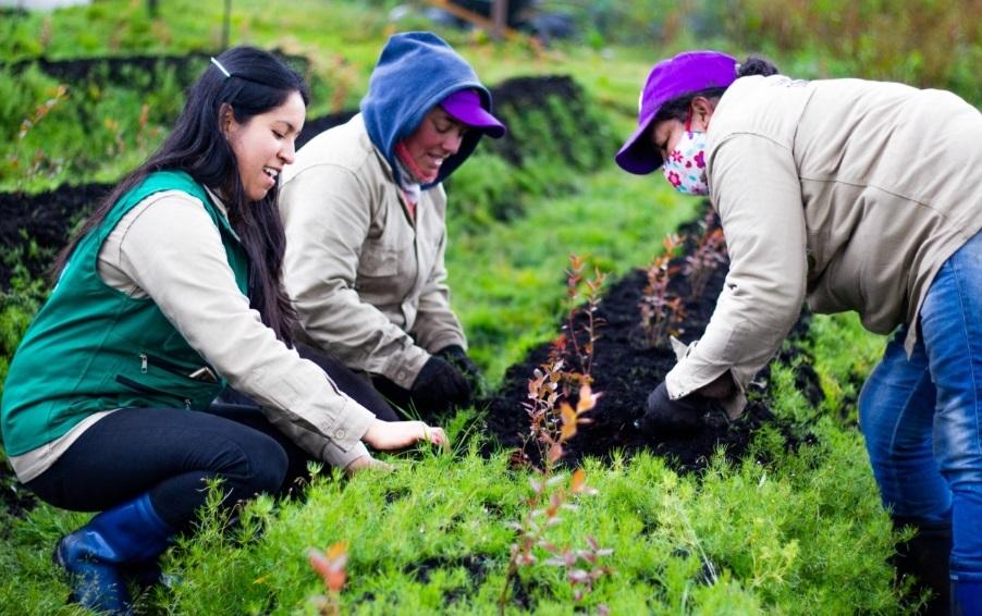 $8 mil millones para el emprendimiento femenino en el sector rural