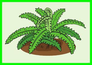penjelasan materi pelajaran tema 2 kelas 6 k13 tumbuhan higrofit
