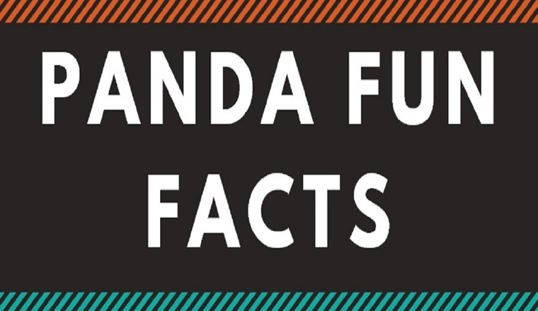 9 Adorable Facts About Pandas #infographic