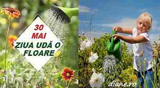"""30 mai: Ziua """"Udă o floare"""""""