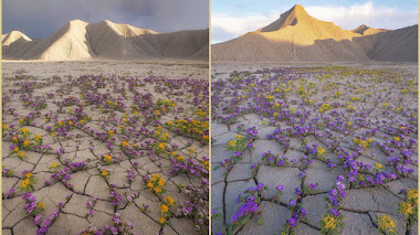 Desierto florido en Utah