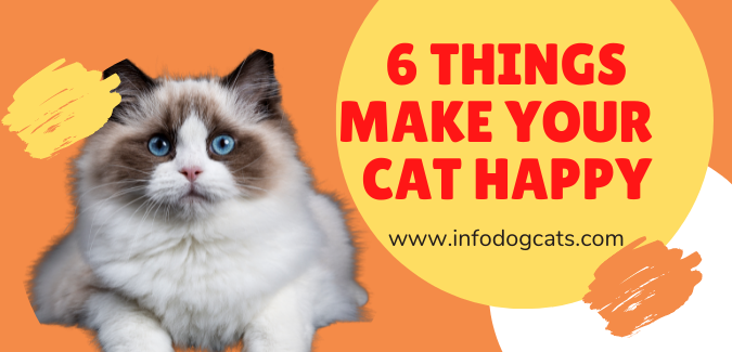 6 things make your  cat happy infodogcats 6things make your  cat happy infodogcats