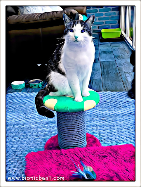 Melvyn's Shroom'a'licious Selfie ©BionicBasil® Caturday Art Hop