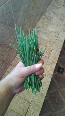 plantação-cebolinha-casa