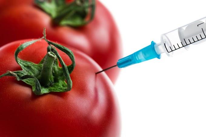 Hihetetlen, de igaz: génmódosított paradicsomból készülhet az új generációs koronavírus-vakcina