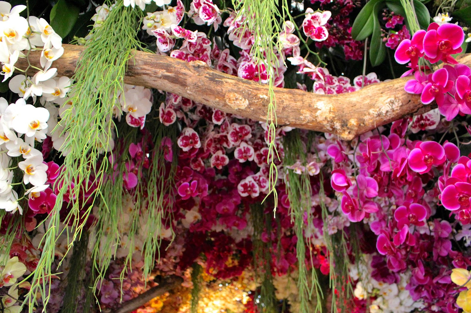 Orchid Tunnel Chelsea Flower Show 2016
