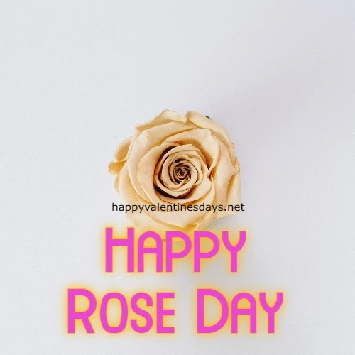 Rose Day Images 2021 for WhatsApp DP