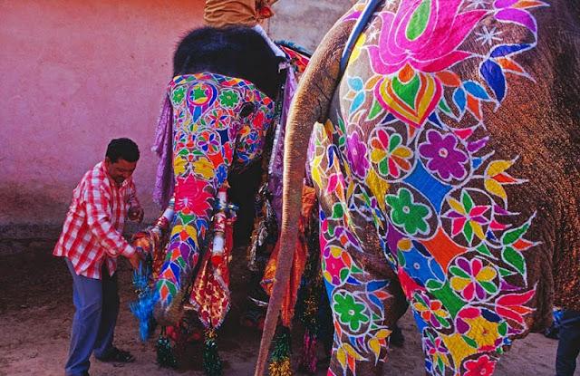 Festival del Elefante en Jaipur Paquidermo