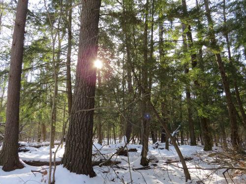 hemlock grove in snow