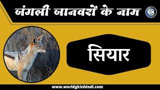 jackal animal name in hindi