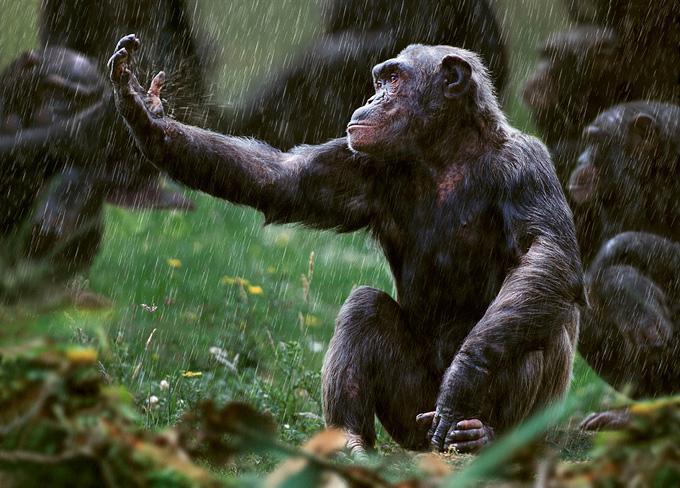 Steve Bloom - Wildlife Photography Monkey