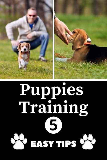 Easy Tips To Train Your Puppy