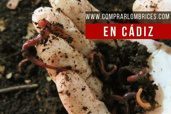 Dónde Comprar Lombrices en Cádiz
