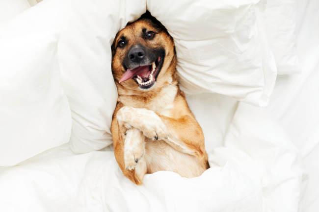 10 rzeczy, które sprawiają psom przyjemność