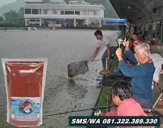 Umpan Ikan Mas Tombro Khusus Untuk Musim Hujan
