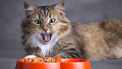 ¿Por qué los gatos siempre piensan que su plato de comida está vacío?